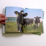 230 meter kaas – beeldspread koeien