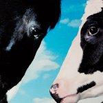 Stroomberg – VERSUS, kaart 'koe en paard' – Nederlands Letterenfonds, Goethe Institut